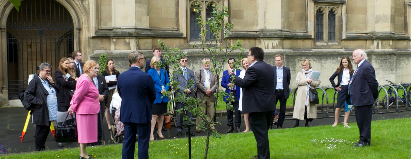 A Tour of the Importance of Trees Around the UK Parliament