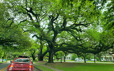 The American Street Tree – Are We Providing Them for Our Future Generations?
